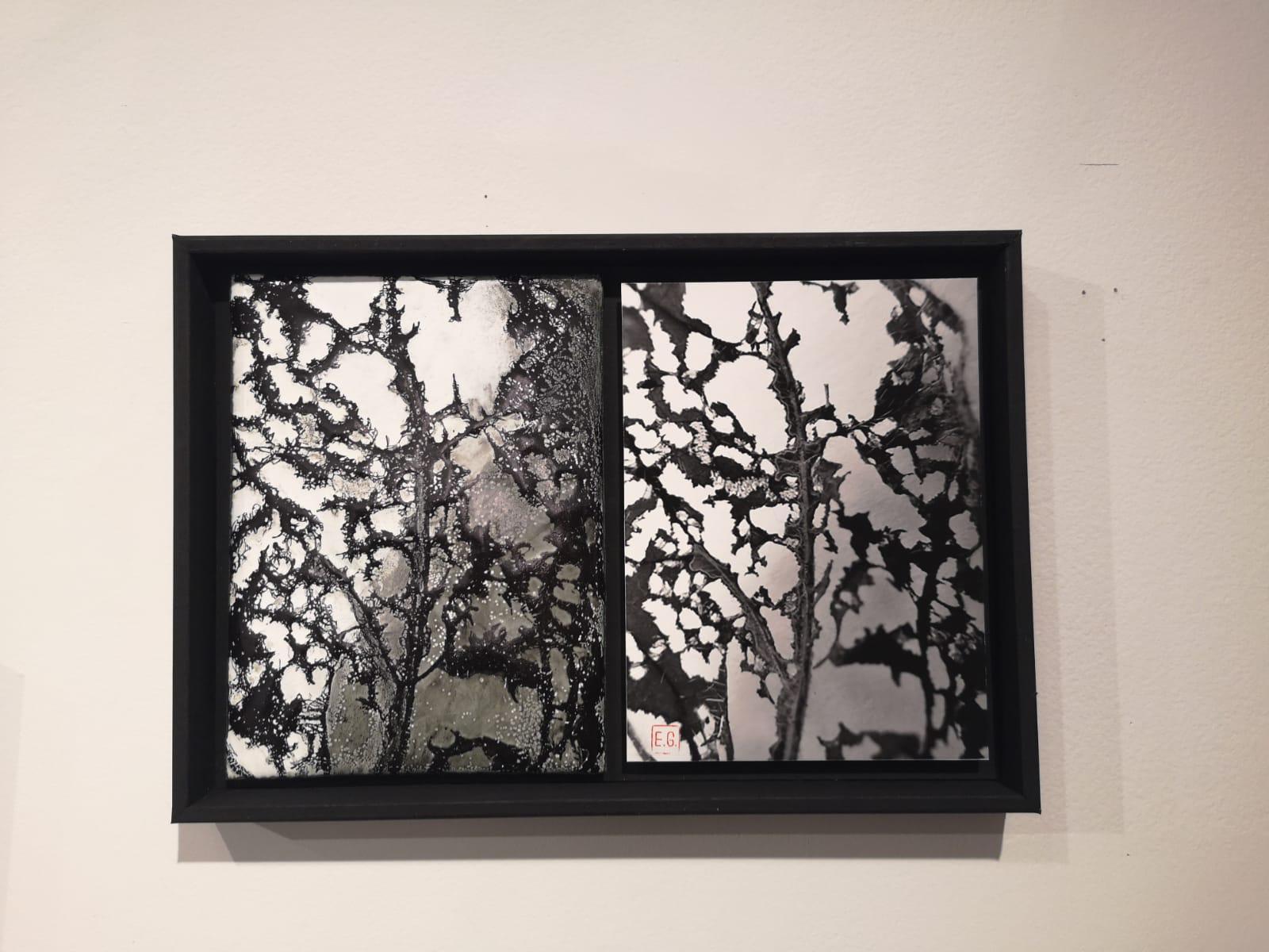 tableau en noir et blanc représentant la feuille déchiquetée avec la version émaillée à gauche- exposition dialogue - exposition Dialogue et la photo à droite